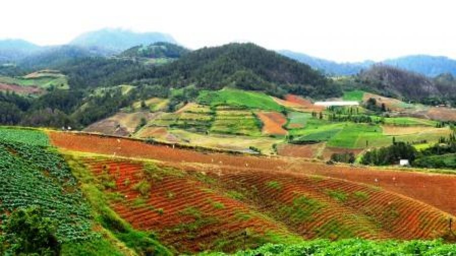 Multiple Vegetable Fields in Mountains